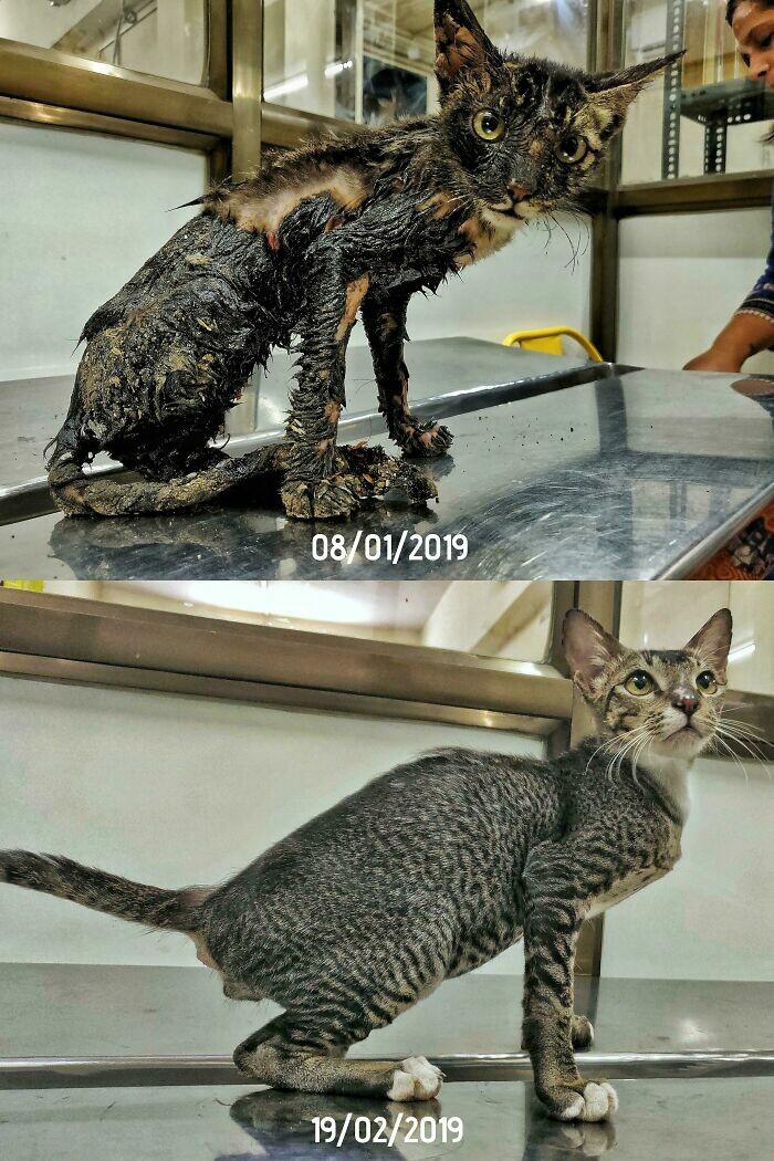 Barınağa terkedilen kedilerin harika dönüşümü